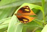Butterfly-Bellavista1a.jpg
