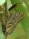 Butterfly-Silanche.jpg
