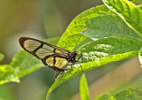 Butterfly-Silanche3.jpg