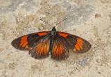 Butterfly-Tandayapa.jpg