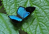 Butterfly-Tandayapa2a.jpg