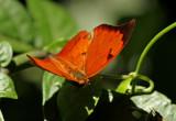 Butterfly-Sani5.jpg