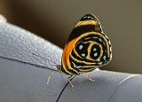 Butterfly-Sani8a.jpg