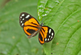 Butterfly-Sani9a.jpg
