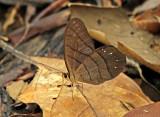 Butterfly-Lumbaqui1b.jpg