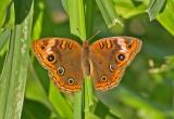 Butterfly-WS.jpg