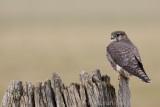 Database birds H - M