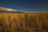 Grassland in golden California