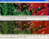 Compare_008.jpg