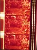 16mm_fw4e1950_004571_LightTable.jpg