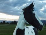 Horses 2011 Cle Elum Washington