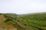 Dartmoor, my walk with my Dog, Bess, on a soggy moor.