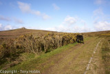 Templer Way with the Dartmoor Search and Rescue (Ashburton) team 22.4.12