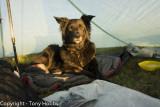 Dartmoor Camp in Cuben Trailstar July 2012 (3rd Camp!)