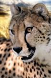 Zoo & Wildlife