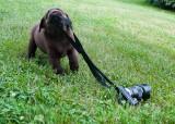 photogtrapher dog vw 2 June 24 2012.jpg