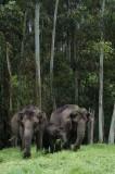 DSC 30038 wild elephants.JPG