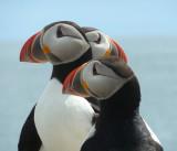 Grand Manan & Machias Seal Island 2011