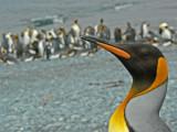 Subantarctic islands of New Zealand and Australia (2007)