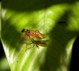 Superfly, Jungles Of Tortuguero