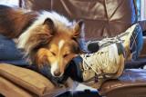[2012.05.10] Falling asleep at his master's feet