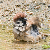 [2012.05.23] even cuter after a proper bath