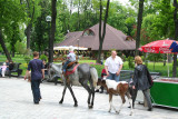 A little boy in the park riding a horse with a pony following.