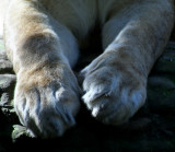 Paws a While
