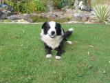 'Tip' greatest ever farm dog in the world
