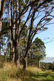 Manukau Harbour in background lower right. 6831.jpg