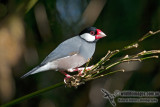 Sparrows and Exotic Finches