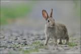 Rabbit #2