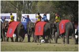 La Fête des Eléphants à Surin - Thailande