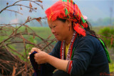 Red Dzao - Hoang Su Phi
