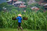 In the fields of a Taï village.