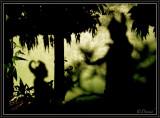 Whispers in Gods' Garden.