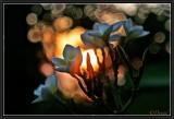 Les parfums de la nuit.