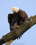 Bald Eagle Stretch