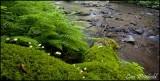 Funji creek