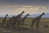 Giraffes near Sunset