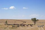 Migration Landscape