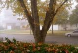 Fogged in fall morning in Merrick