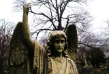 Angel at Woodlawn
