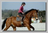 ::  Horses at Saint-Lô  ::