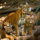 Zoo and Safari Park Two