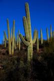 Around Tucson