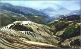 terrace_rice_field