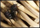 Flies in action
