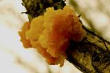 Fungal attack (Oak)