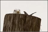 Gull´s Nest